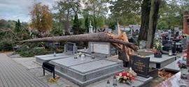 Powalone drzewo na kolskim cmentarzu parafialnym  relacja/foto
